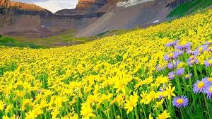 विश्व धरोहर फूलों की घाटी शीत काल में पर्यटकों के लिए बंद