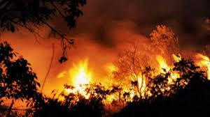 उत्तराखंड में फायर सीजन से पहले ही नंदा देवी नेशनल पार्क के जंगलों में लगी भयंकर आग
